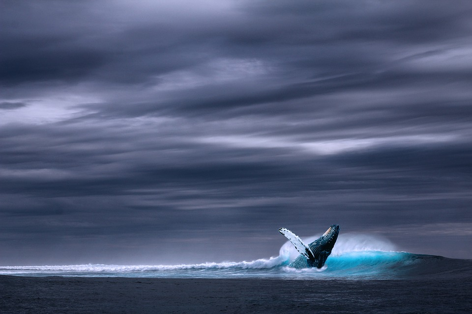 Ocean, Sea, Wave, Whale, Rainy, Side, Sky Cover