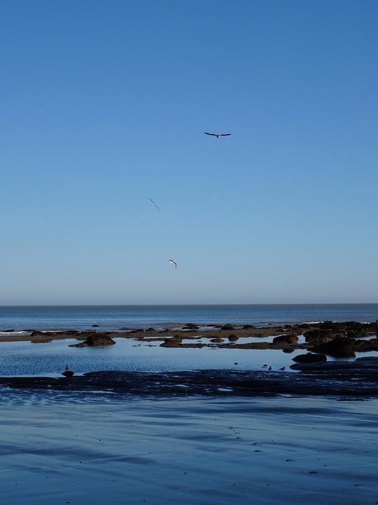Seagulls, Ocean, Sea, Beach, Bird, Fly, Wings, Feather