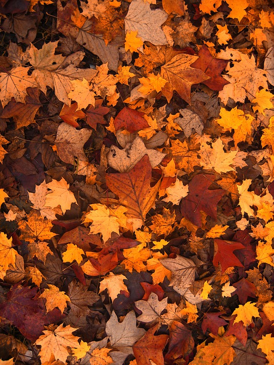 Fall Foliage, Autumn, Leaves, October, Forest, Brown