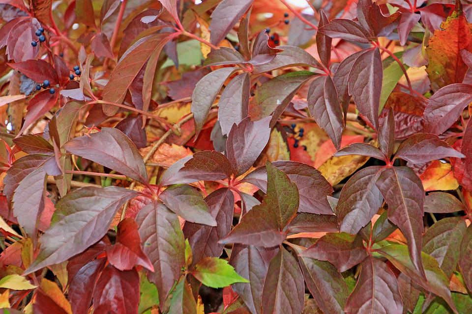 Autumn, Colorful, Leaves, Garden, October, Color