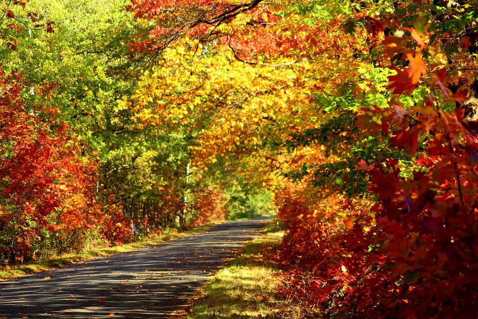 Autumn, Colorful Tree, Foliage, October, In The Fall