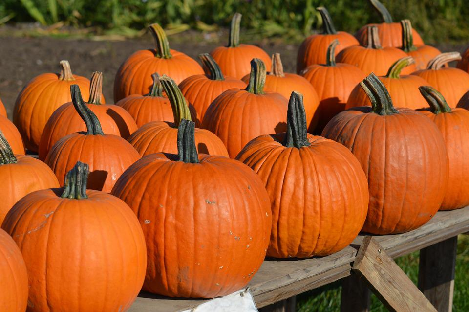 Pumpkin, Autumn, October, Halloween, Orange, Gourd