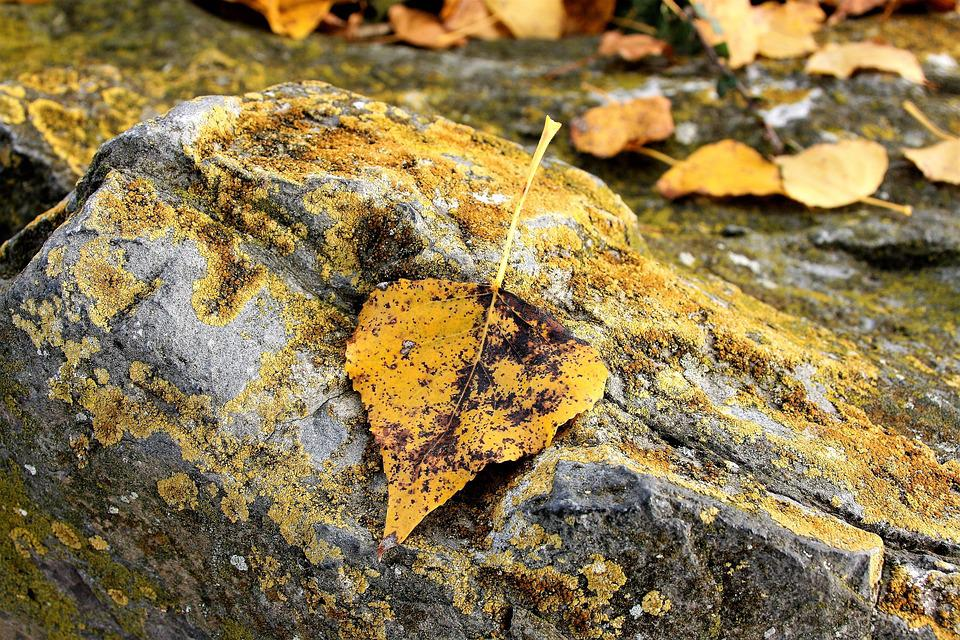 Masks, Yellow Leaves, Autumn, Rock, October, Collapse