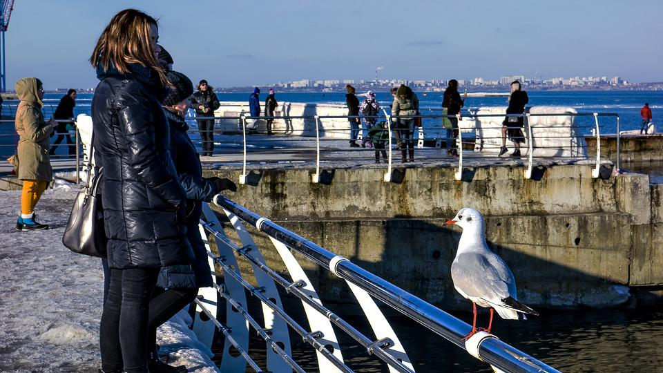 Odessa, Langeron, Seagull, People