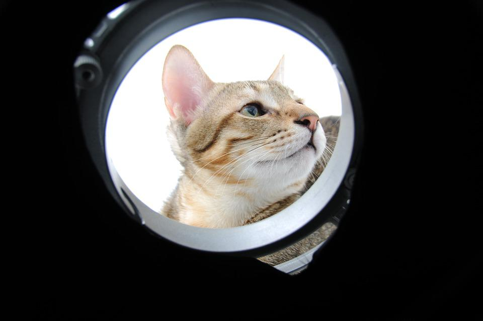 Cat, Circle, Of An Ellipse
