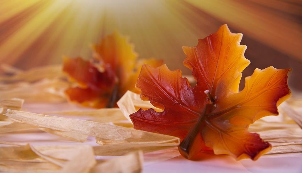 Autumn Leaf, Candle, Sun, Sunlight, Of Course