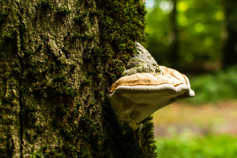 Nature, Of Course, Tree, Closeup, Forest, Mushroom