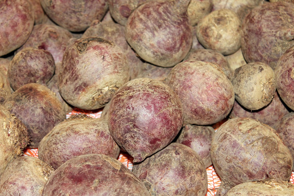 Beetroot, Turnip, Beet, Of Rahner