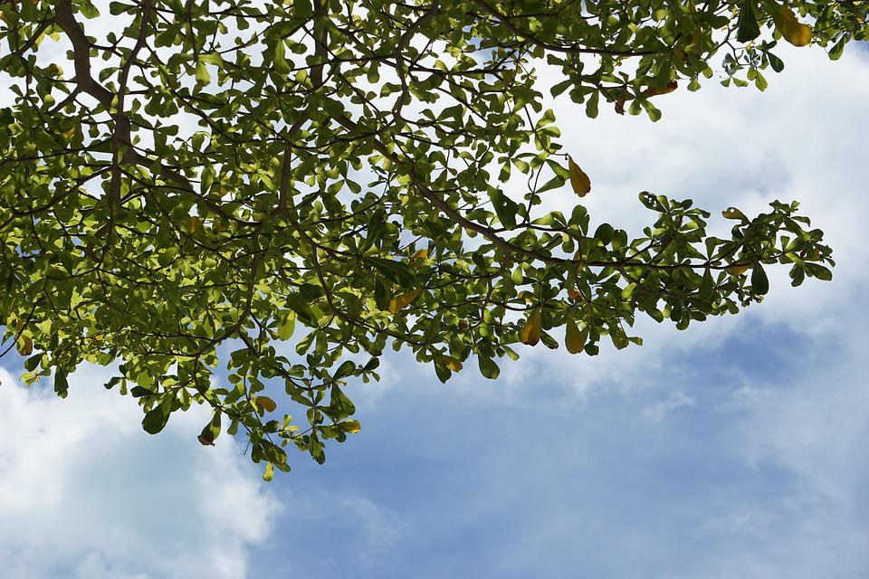 The Branches, Of The Tree Intersect, With The Sky