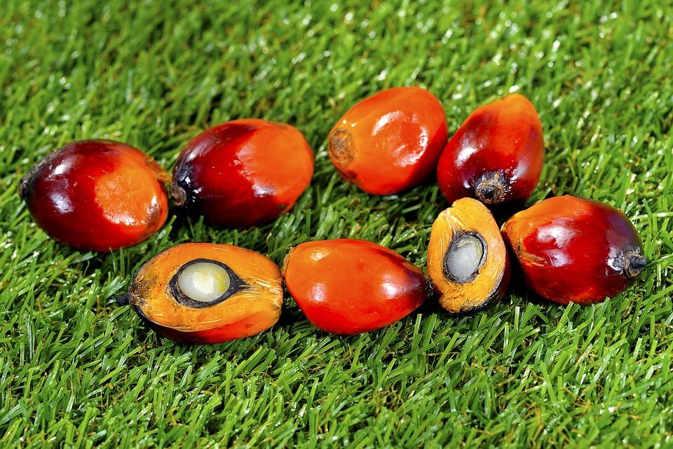 Fall, Garden, Leaf, Fruit, Food, Palm, Oil, Background