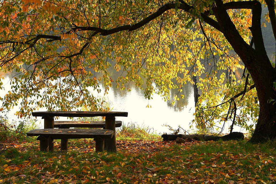 Lake, Bench, Autumn, Vanishing, Old Age, Nature