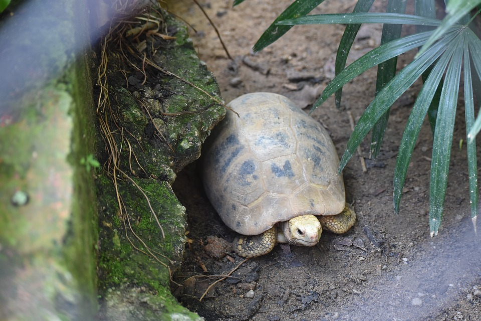 Tortoise, Zoo, Animal, Reptile, Shell, Old, Nature