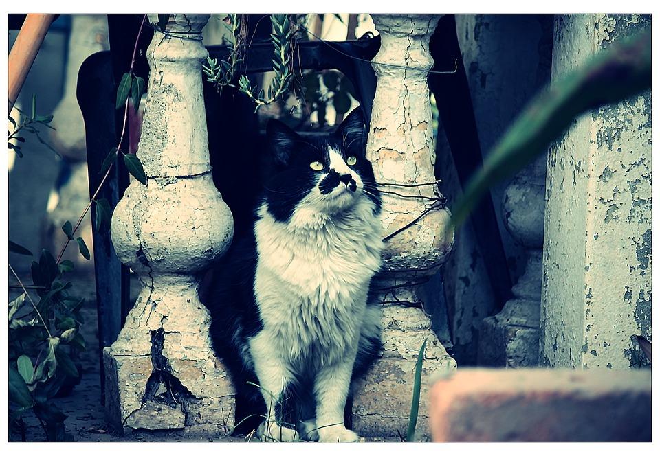 Cat, Pet, Feline, Old