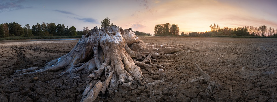 Root, Tree Stump, Dehydrated, Lake, Drought, Old