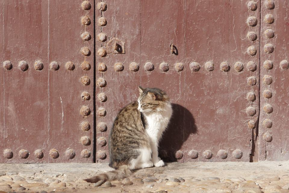 Cat, Old Door, Marocco