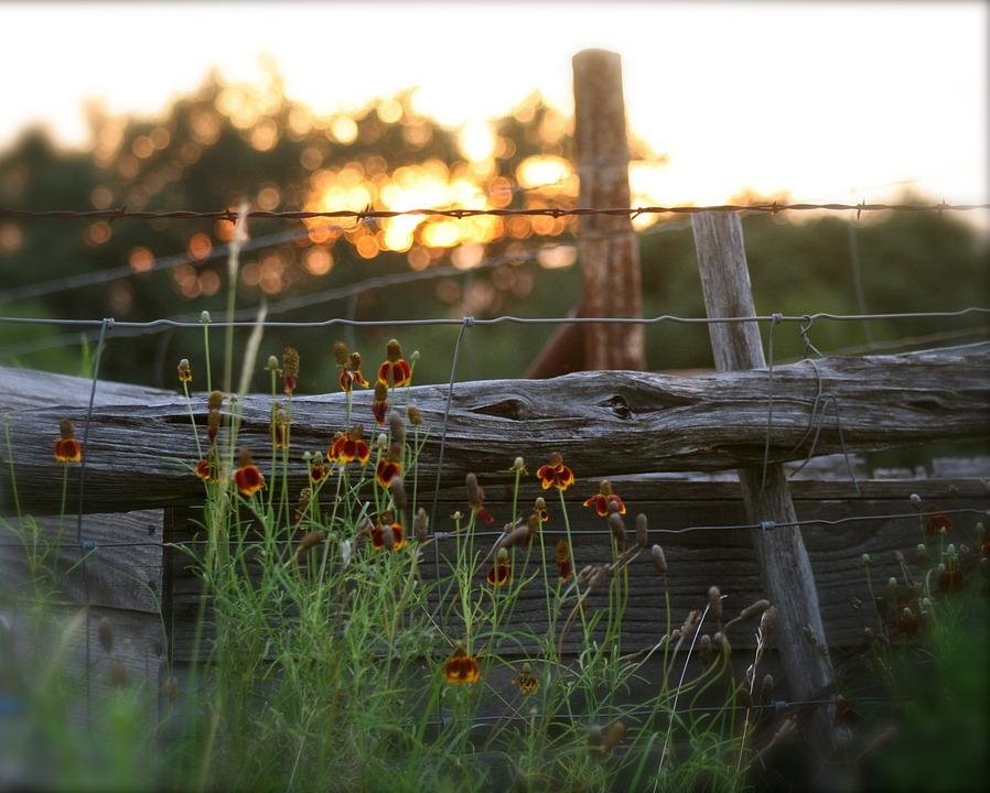 Fence, Sunset, Summer Sunset, Gate, Old Gate
