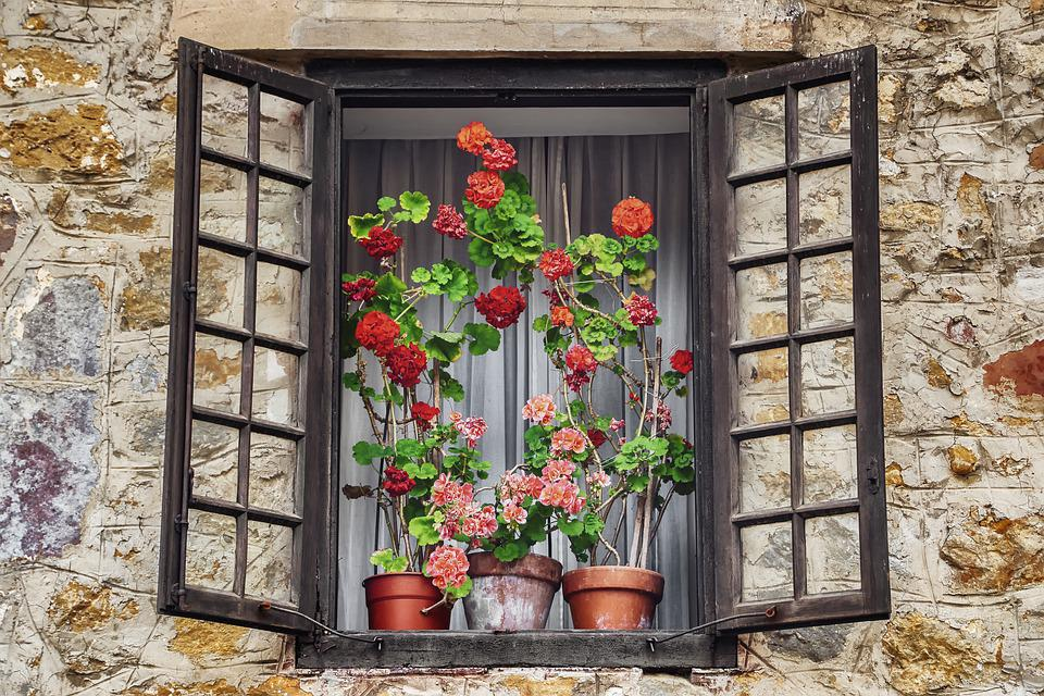 Window, Flowers, Glass, Facade, Home, Wall, Old