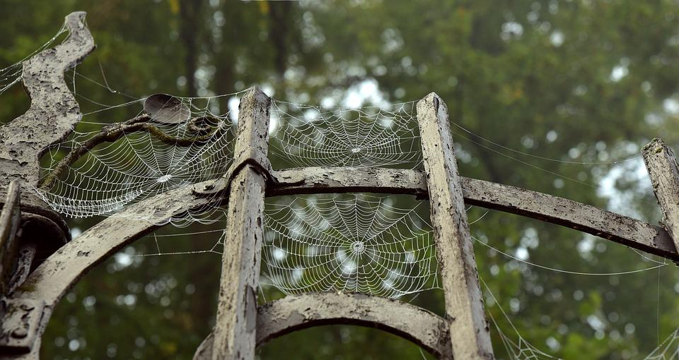 Metal, Metal Gate, Spider Webs, Old, Indian Summer