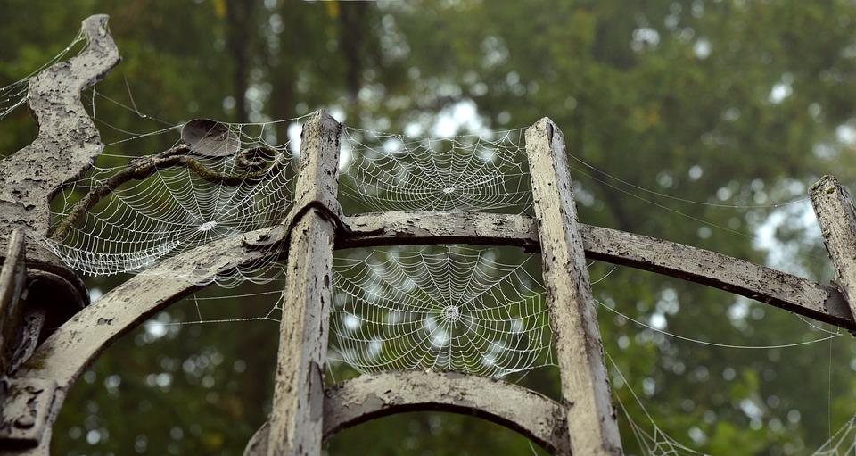 Metal, Metal Gate, Spider Webs, Old, Indian Summer