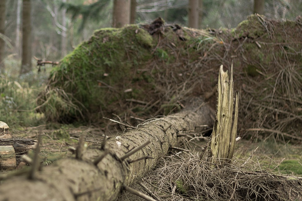 Nature, Wood, Tree, Plant, Old, Root, Moss, Tribe