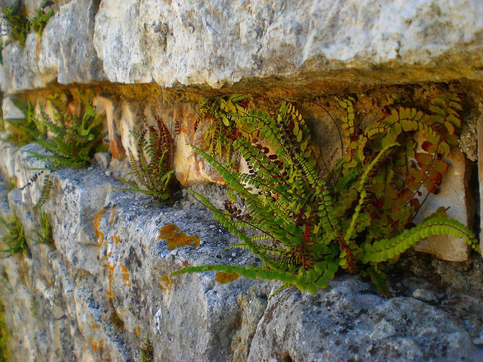 Fern, Wall, Nature, Stone Wall, Old, Break Up, Stones