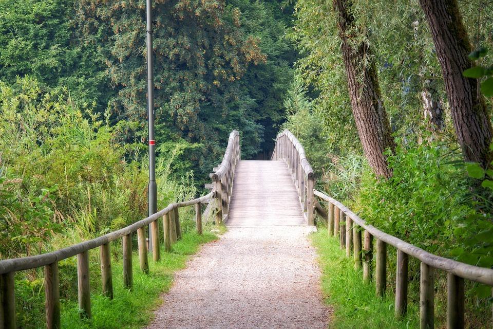 Wooden Bridge, Bridge, Transition, Nature, Lake, Old