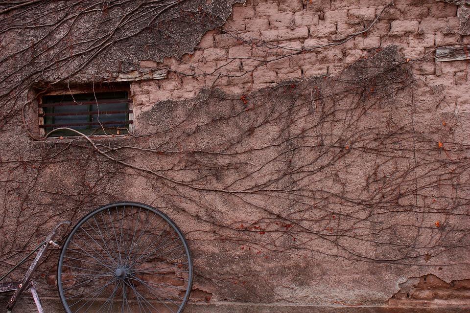Vine, Plant, Window, Old, Adobe, Wall, Poverty