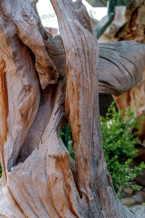 Heiligenhafen, Wood, Tree, Old Root, Gnarled, Tree Root