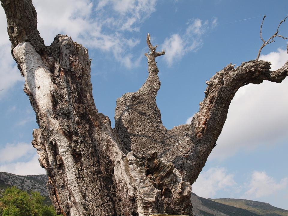 Trunk, Tree, Death, Sky, Tree Trunk, Old, Branch