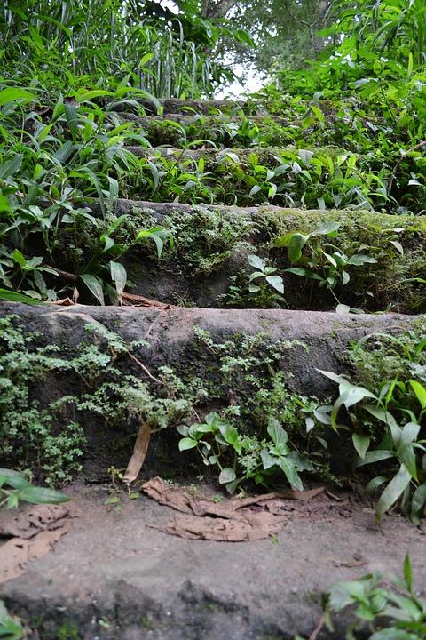Old Steps, Rock Steps, Woods, Shrubs, Rocks, Sri Lanka