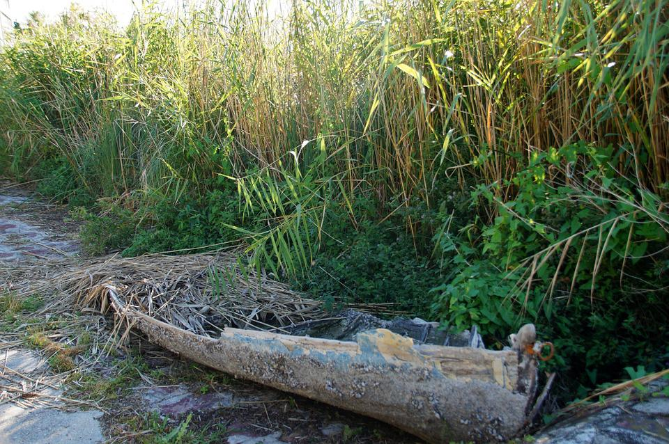 Rowboat, The Wreck Of The, Wreck, Old, Reeds, Broken