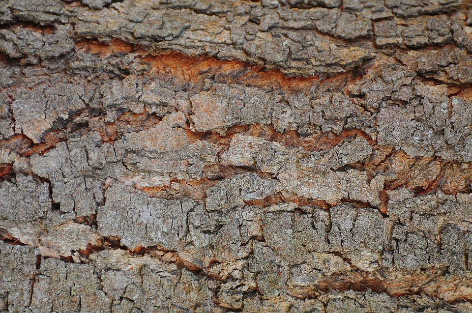 Background, Flying, Shell, Wood, Old Tree, Texture