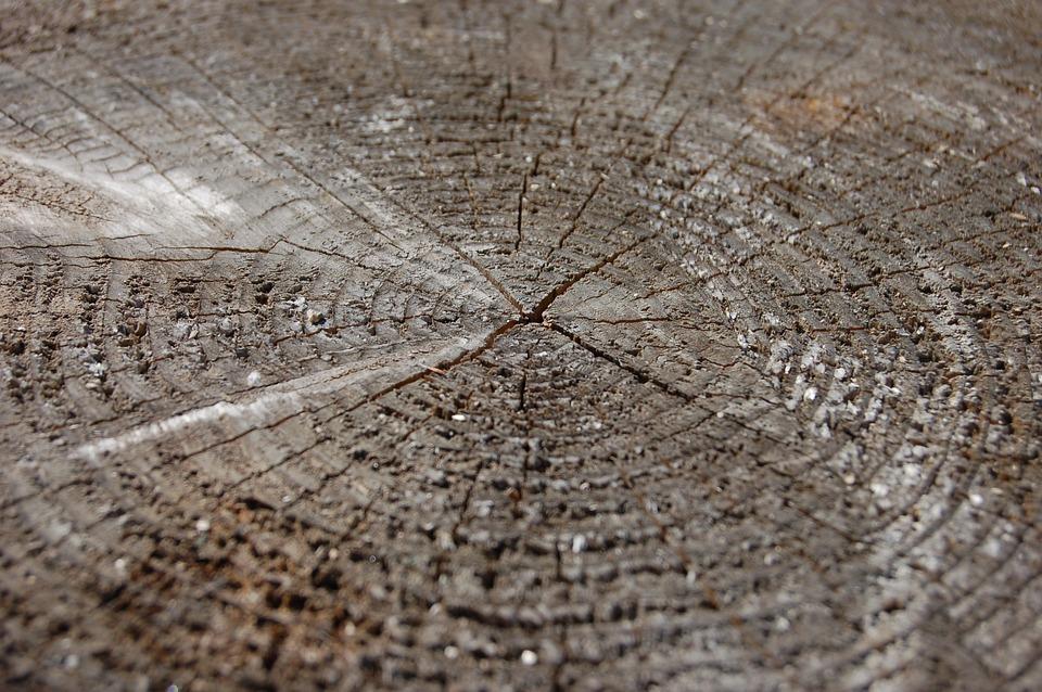 Tree, Saw Cut, Circles, Old Tree, Felling, Trees