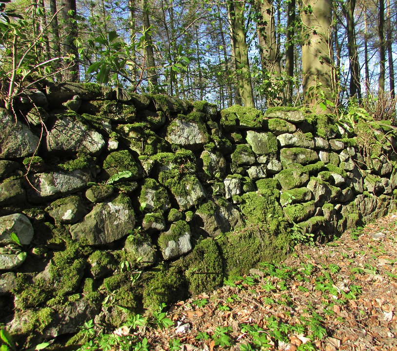 Wall, Moss, Old Wall, Moss Covered, Overgrown, Wood