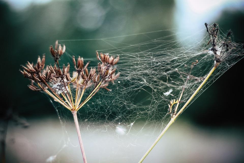 Old Women, Cobweb, Fog, Indian Summer, Dewdrop, Green