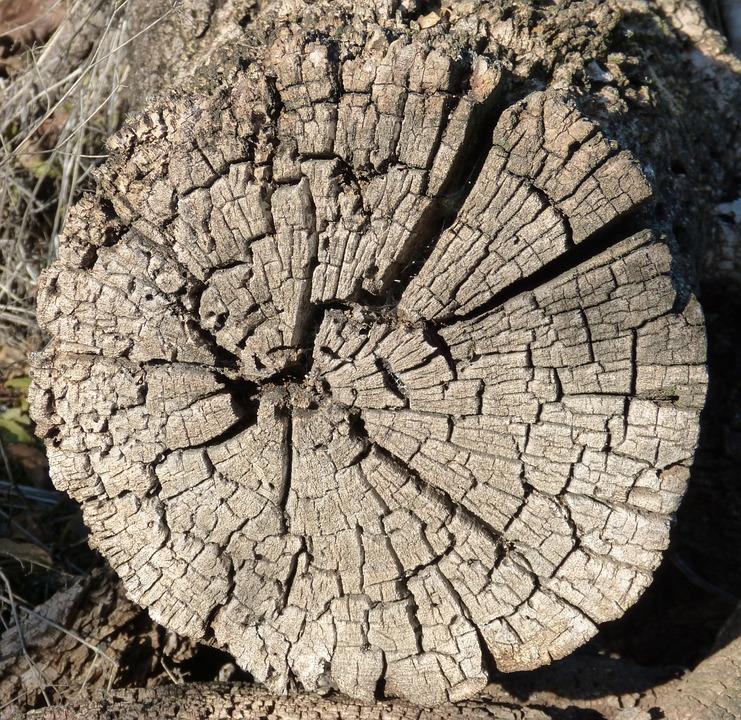 Trunk, Worn, Old, Cuartedado, Wood