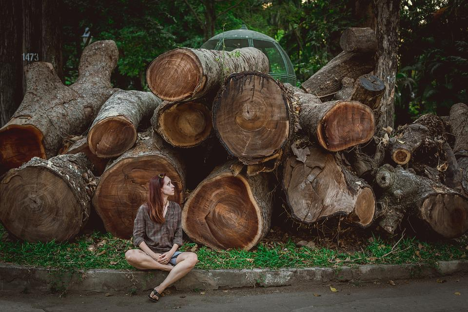 Vietnam, Tree, Log, Girl, Olga, Ozik, Texture, Nature