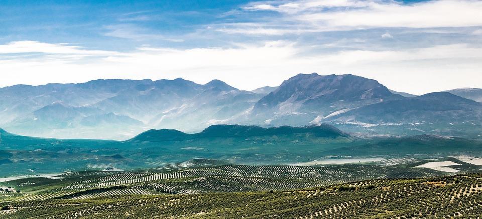 Landscape, Olive Trees, Olive, Field, Sky, Sierra