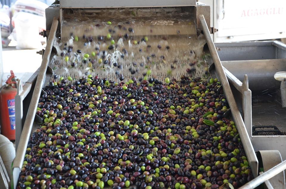 Olive Washing Machine, Olive Wash, Olive Oil Production