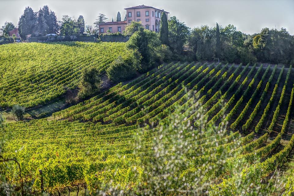 Wine, Vintage, Grapes, Olivo, Campaign, Screw