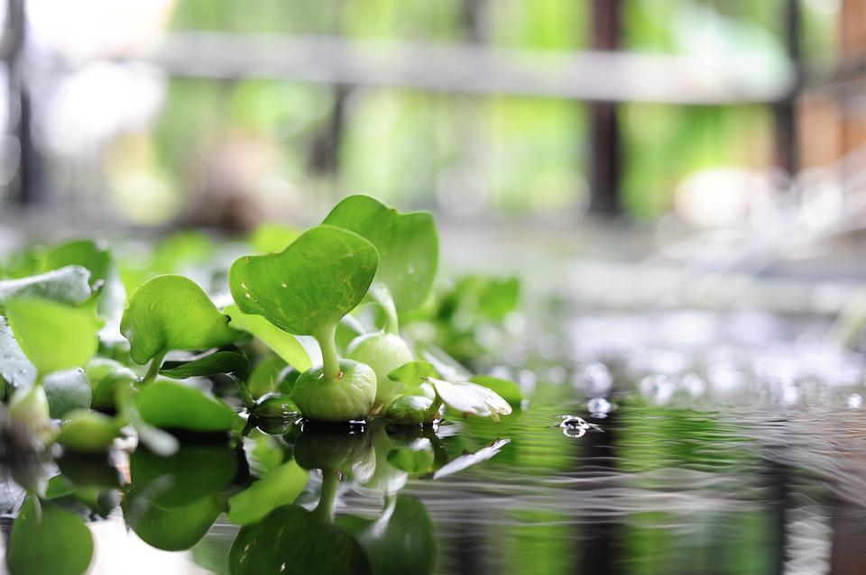 On Water, Green, Plant