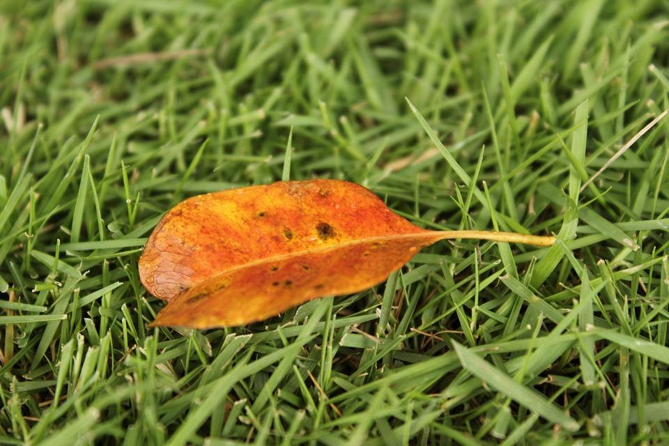 Orange Leaf, One Leaf, Autumn, Fall, Grass