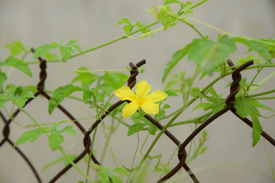 Wallpaper, Green, Flower, Plant, Yellow, Only One