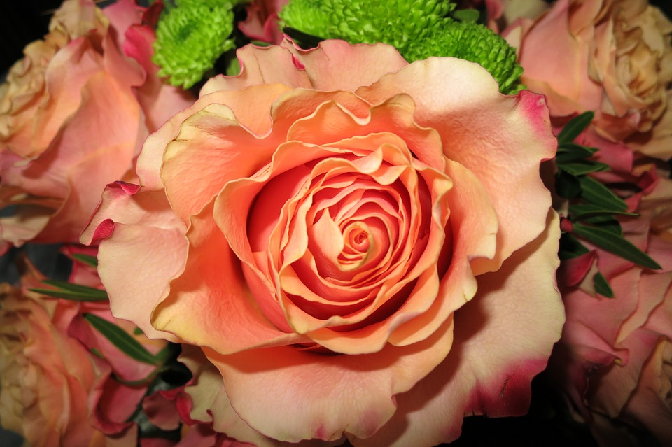 Orange Rose, Open Flower, Close Up