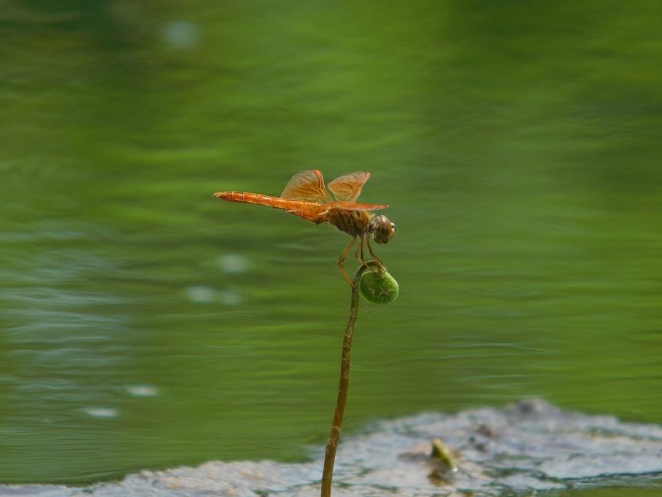 Air, Orange, Green Water