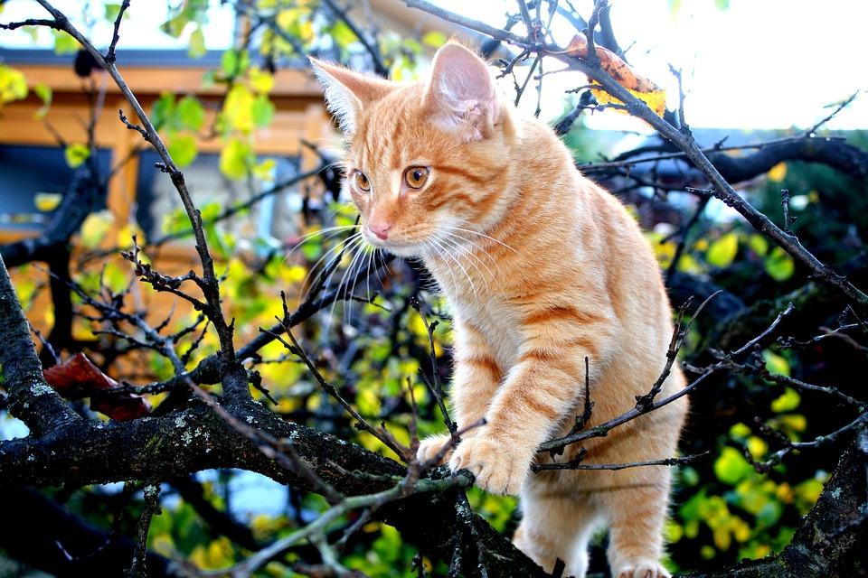 Cat, Orange, Autumn, Animal, Pet