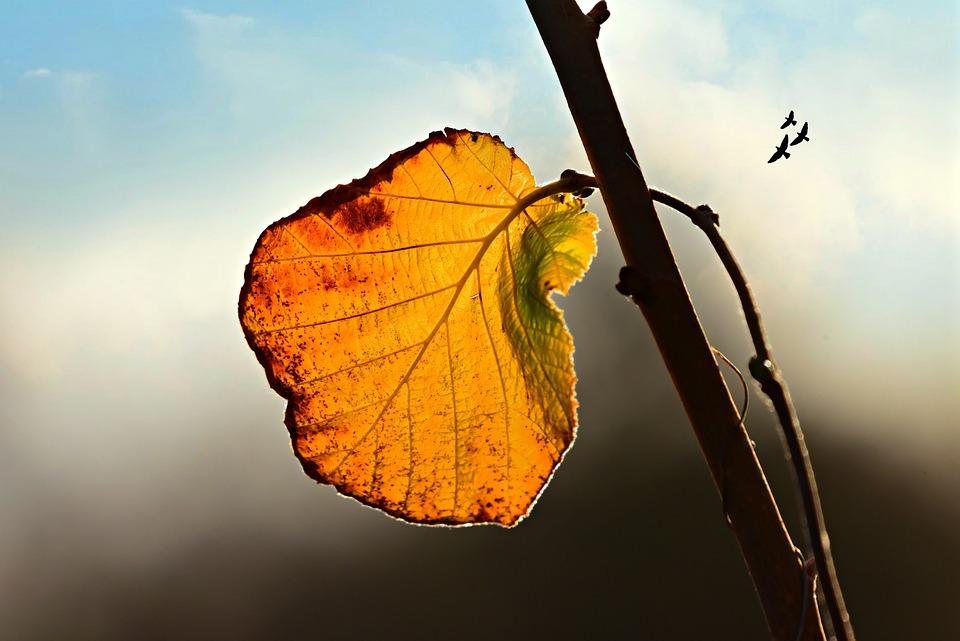 Leaf, Fall, Autumn, Orange, Branch