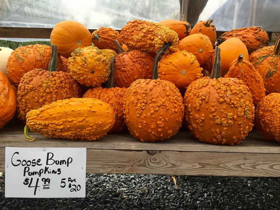 Pumpkins, Halloween, Autumn, Orange, October, Harvest
