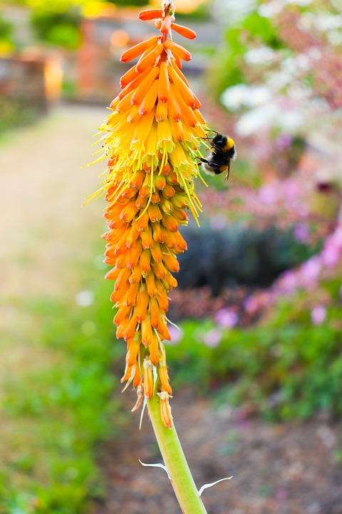 Nature, Flower, Flora, Bee, Bumblebee, Orange, Yellow
