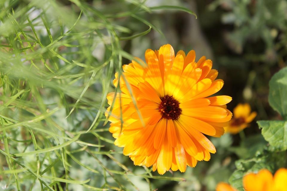 Autumn, Flowers, Yellow, Orange, Nature, Blossom, Bloom